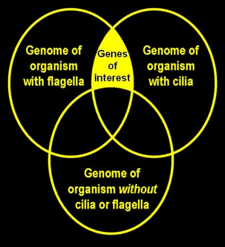 genomevenn